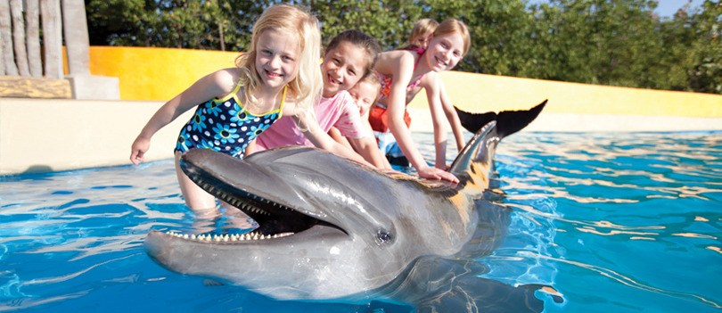 Swim with Dolphins in Riviera Nayarit and Puerto Vallarta