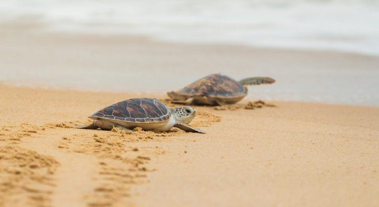 Turtles - Mexico's Enchanting Endangered Species